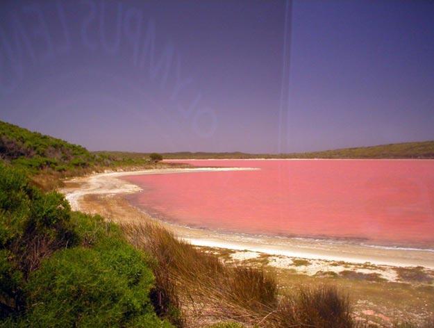 розовое озеро 6 (625x472, 208Kb)