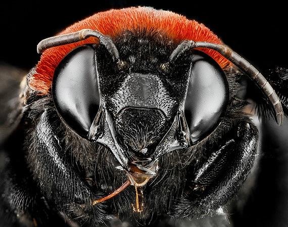 пчела фото 7 (570x449, 240Kb)