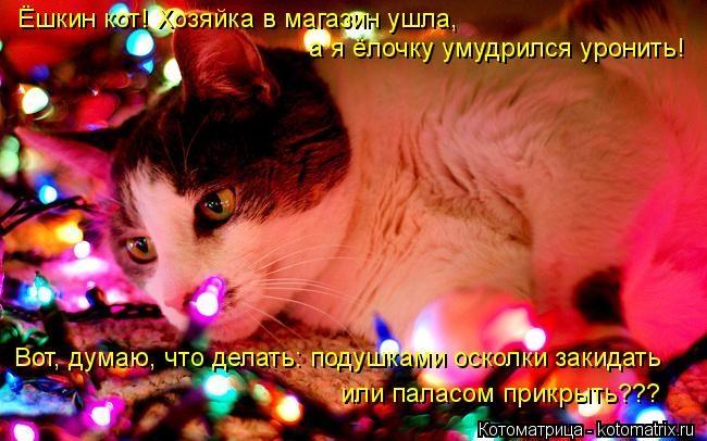 kotomatritsa_Qf (650x406, 191Kb)