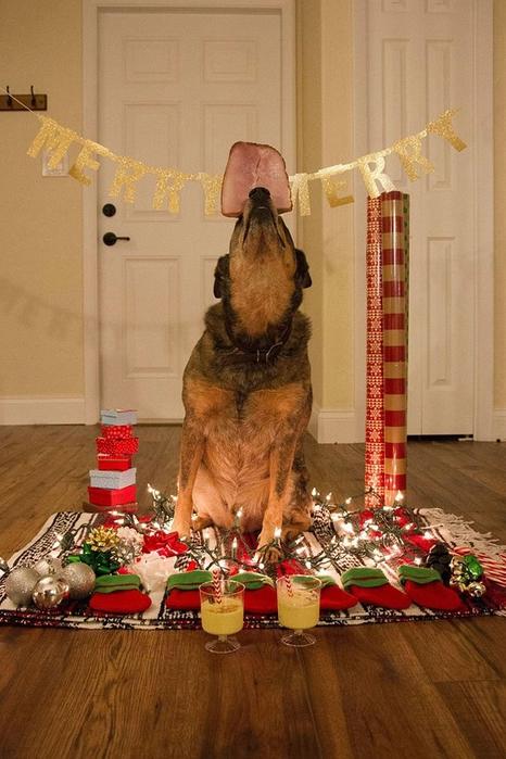 прикольные фото собак (466x700, 253Kb)