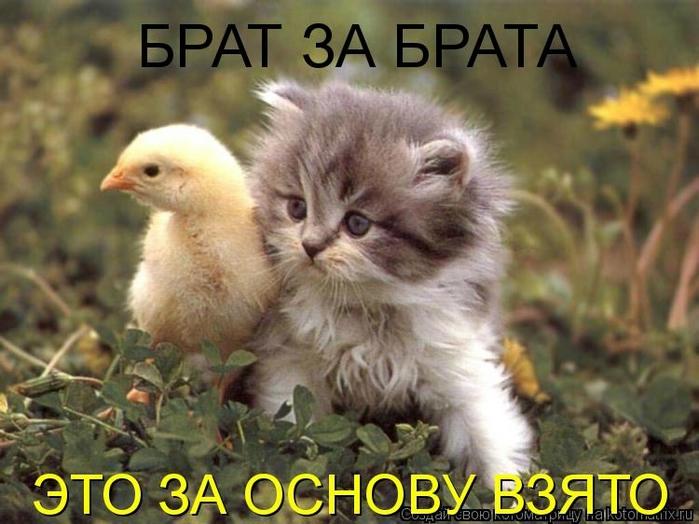 Котоматрица - 2013 kotomatritsa_-b (700x524, 247Kb)