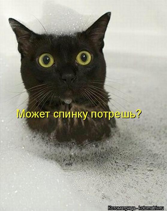 Котоматрица - 2013 kotomatritsa_gD (557x700, 199Kb)