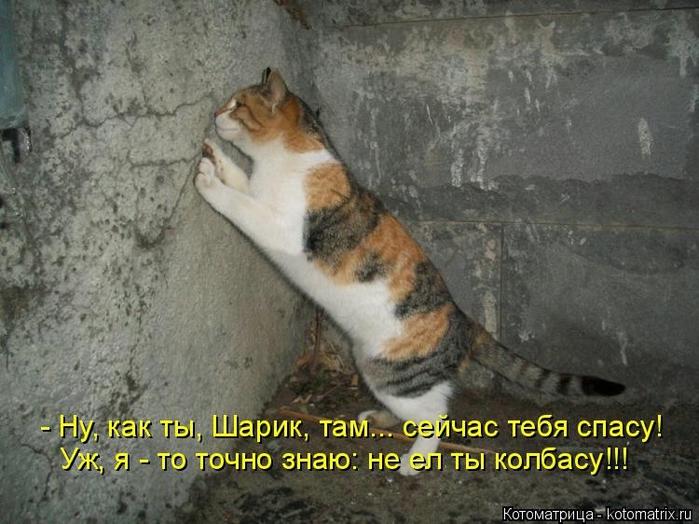 Котоматрица - 2013 kotomatritsa_m (700x524, 261Kb)