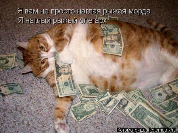 Котоматрица - 2013 kotomatritsa_rJ (618x463, 154Kb)