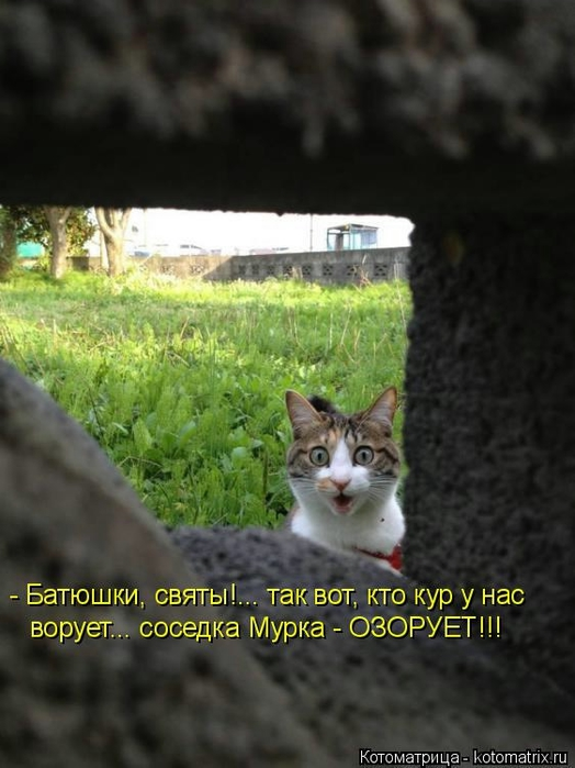 Котоматрица - 2013 kotomatritsa_yK (524x700, 202Kb)