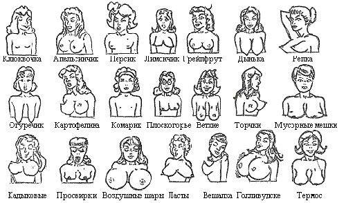 жен грудь сиси
