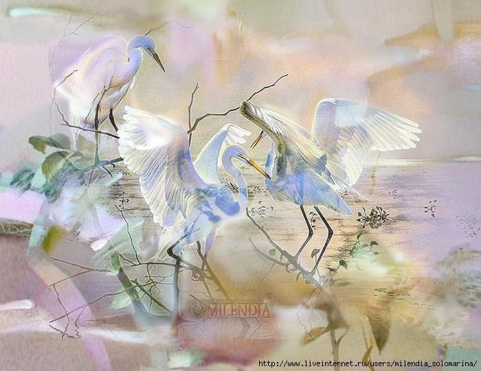 Рисунки бабочек в полёте