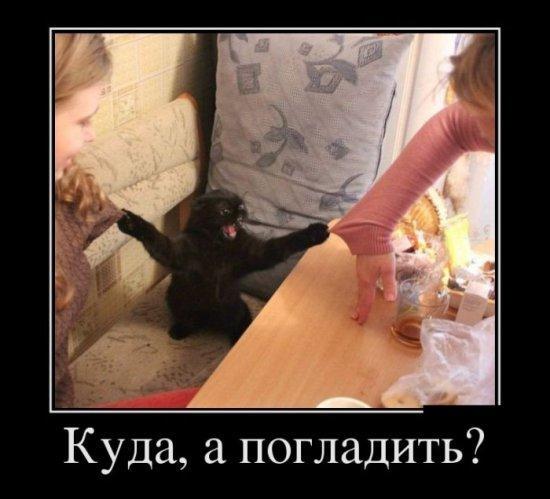 smeshnie_kartinki_13866447004 (550x499, 104Kb)