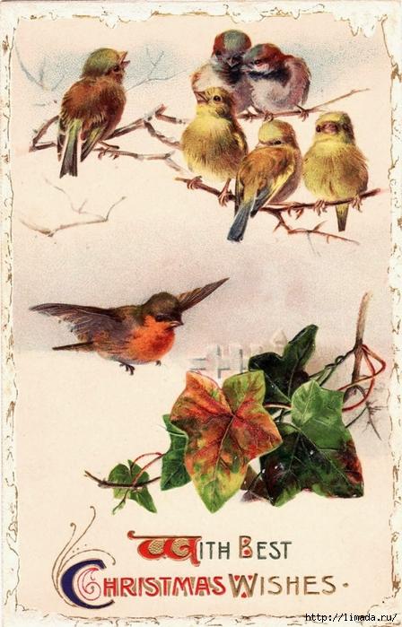 birds1 (448x700, 280Kb)