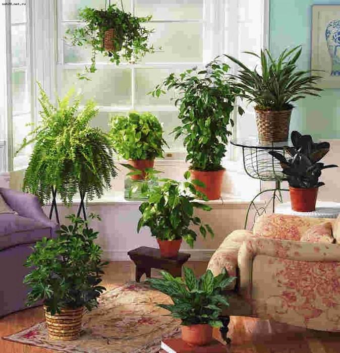 растения (674x700, 143Kb)
