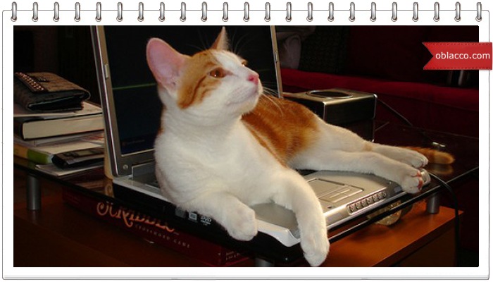 Коты, компьютеры и дети - продвинутый детский сад