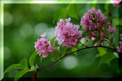 nice_flowers_21 (400x267, 181Kb)