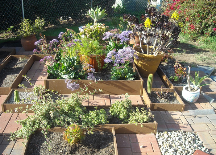 garden-incredible-succulent-garden-decorating-design-ideas-with-rectangular-old-paving-block-wooden-board-plant-partition-and-succulent-plant-decoration-wonderful-succulents-garden-decoration-design (700x503, 561Kb)