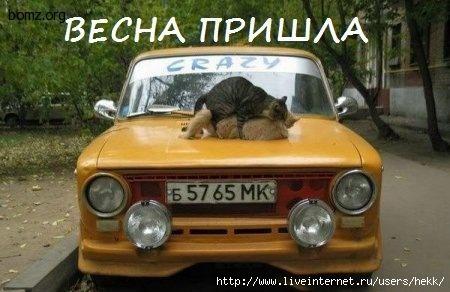 875652-2011.03.25-10.21.50-bomz.org-lol_vesna_prishla_u_kotov (450x292, 87Kb)