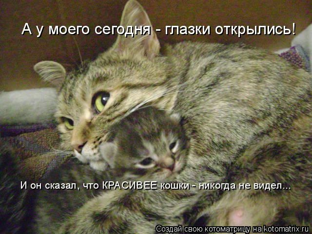 kotomatritsa_IL (640x480, 166Kb)