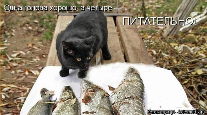 kotomatritsa_JQ (700x389, 209Kb)