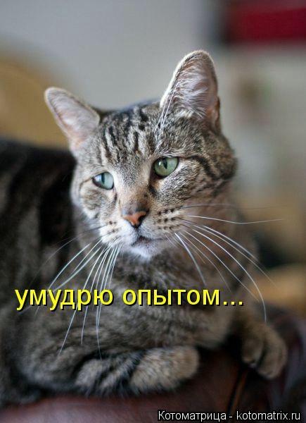 kotomatritsa_mb (435x600, 101Kb)