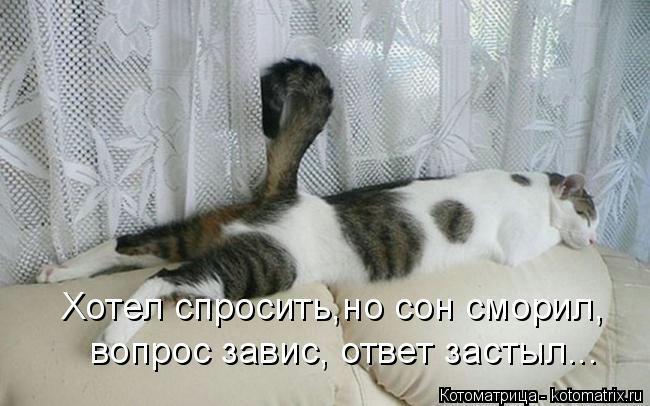 kotomatritsa_YV (650x406, 120Kb)
