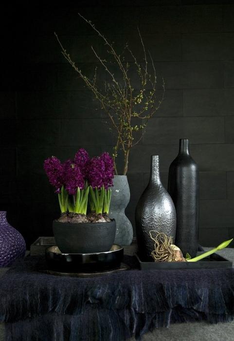Луковичные цветы в интерьере. Подборка красивых фотографий (7) (481x700, 241Kb)