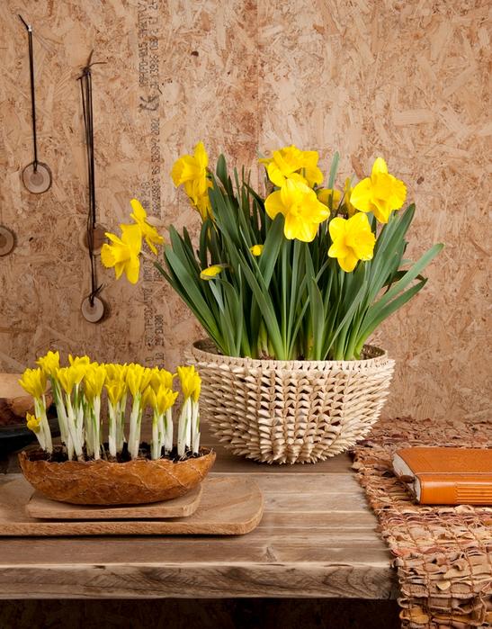Луковичные цветы в интерьере. Подборка красивых фотографий (12) (547x700, 551Kb)