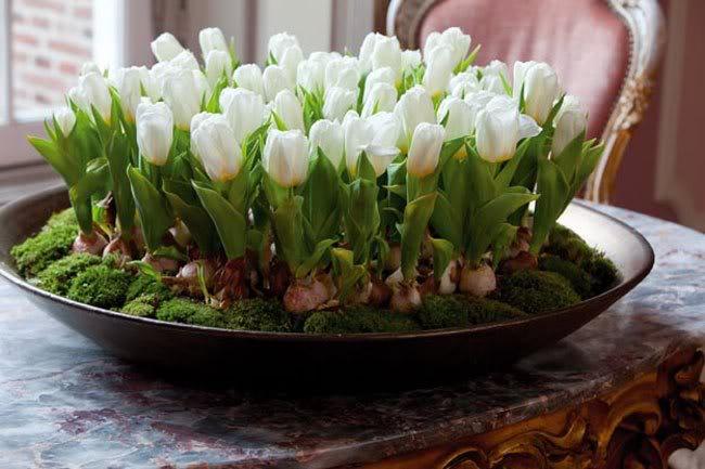 Луковичные цветы в интерьере. Подборка красивых фотографий (16) (650x433, 225Kb)