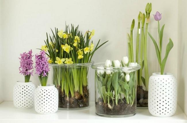 Луковичные цветы в интерьере. Подборка красивых фотографий (18) (650x429, 223Kb)