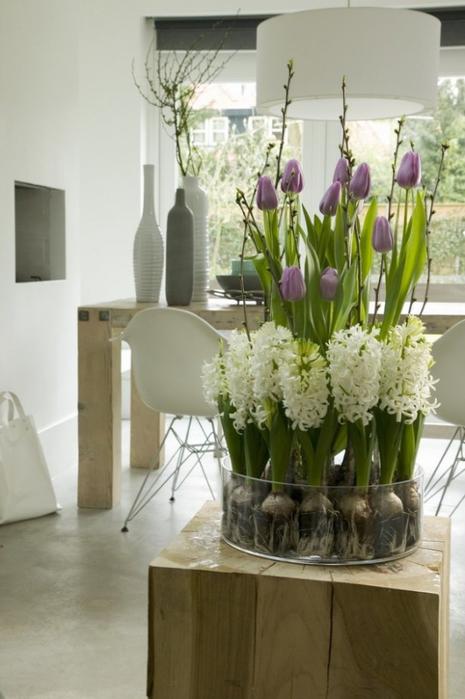 Луковичные цветы в интерьере. Подборка красивых фотографий (31) (465x700, 254Kb)