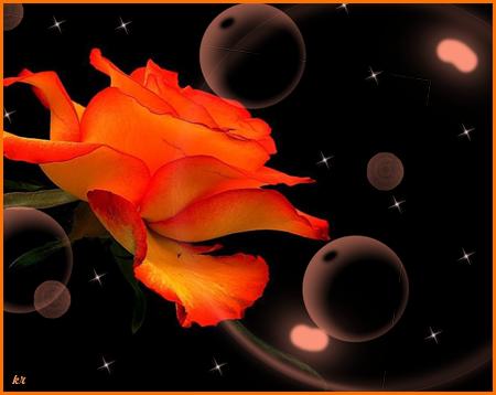 Алая-роза (450x358, 157Kb)