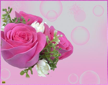 Нежные-розы (450x352, 218Kb)