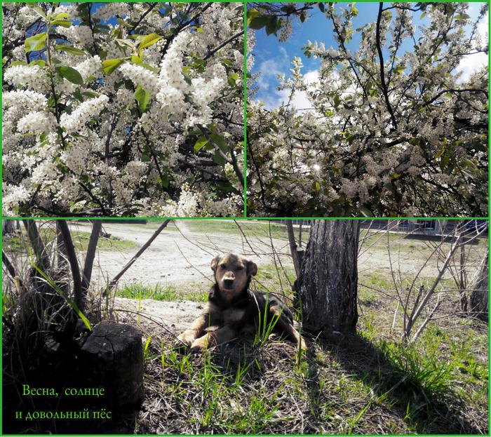весна и пёс (700x623, 303Kb)