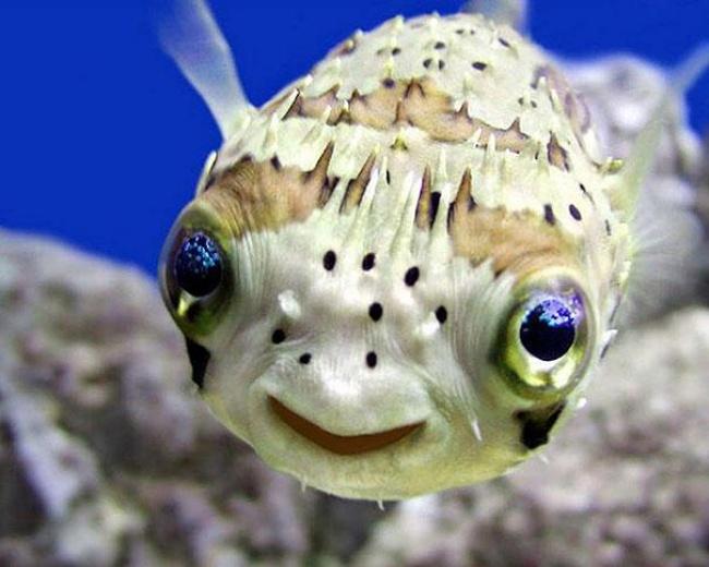 4741155-R3L8T8D-650-cute-smiling-animals-1 (650x520, 245Kb)