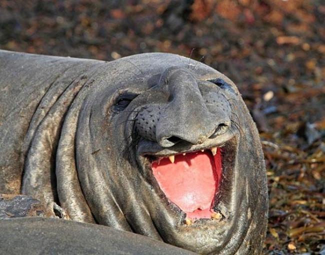 4742805-R3L8T8D-650-cute-smiling-animals-31 (650x511, 321Kb)