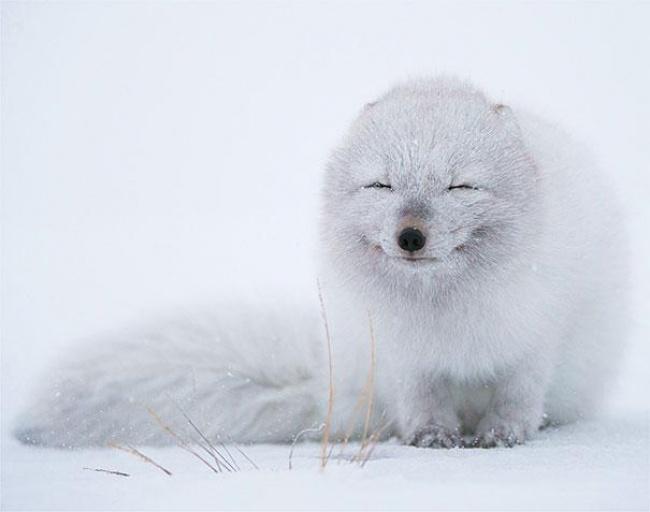 4743355-R3L8T8D-650-cute-smiling-animals-7 (650x512, 123Kb)