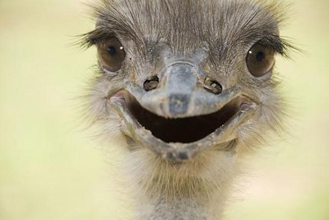 4744005-R3L8T8D-650-cute-smiling-animals-15 (650x435, 171Kb)