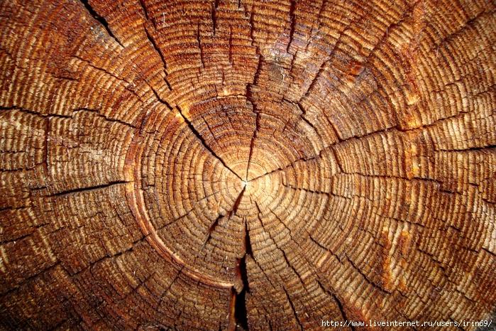 wood_texture1568 (700x466, 474Kb)