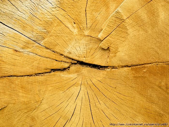 wood_texture1569 (700x525, 444Kb)