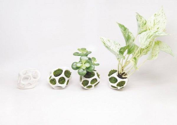 домашние растения 5 (600x423, 113Kb)