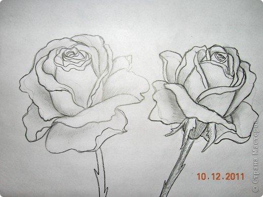 Rosa encantador.  Aplicación de paja.  Master Class (5) (520x390, 120Kb)