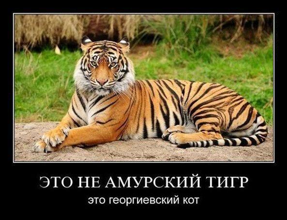 gekot (593x455, 72Kb)