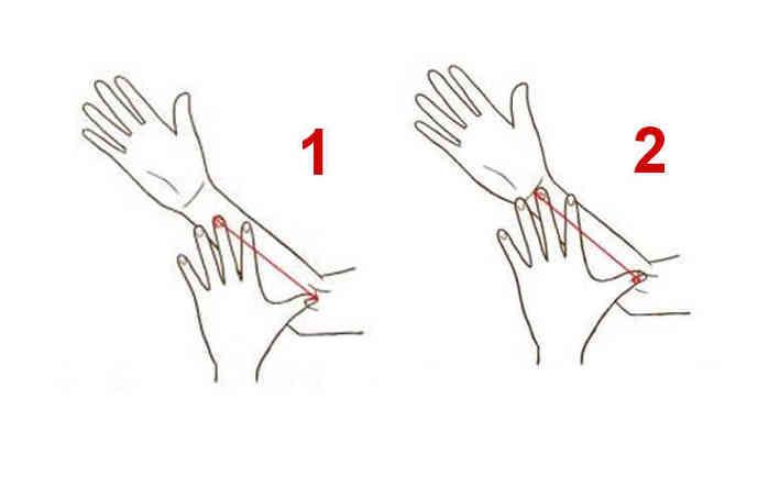 4384049_hands_palms_sizes (700x453, 12Kb)