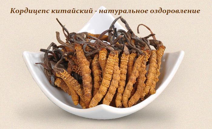1447316869_Kordiceps_kitayskiy__natural_noe_ozdorovlenie (700x426, 528Kb)