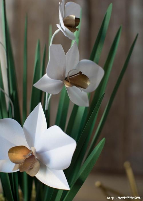 Орхидея ЦИМБИДИУМ из бумаги (6) (500x700, 183Kb)