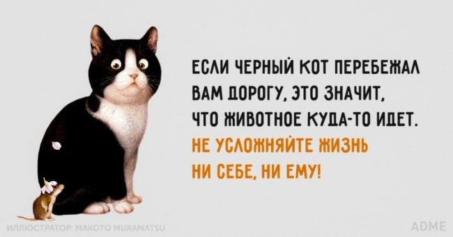 esai-chernyj-kot-perebeshaa-650-1446665917 (650x340, 118Kb)