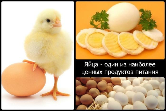 5320643_1413652896_yaycaodiniznaiboleecennyhproduktovpitaniya1024x683 (700x466, 62Kb)