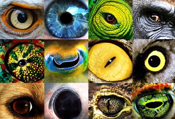 AnimalEyes-http_www_futurity_org (580x396, 157Kb)