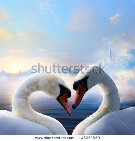 stock-photo--pair-of-swans-in-love-floating-on-the-water-at-sunrise-of-the-day-145052650 (450x470, 40Kb)