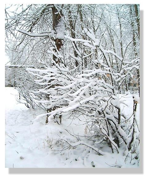 ах, снег, снежок (480x579, 274Kb)