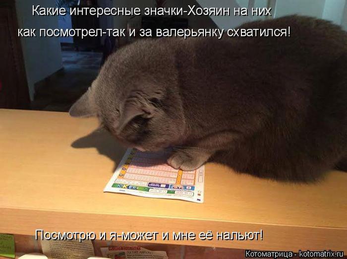 kotomatritsa_5R (700x522, 299Kb)