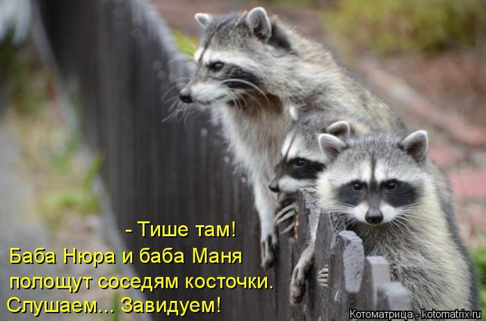 kotomatritsa_l (700x462, 286Kb)