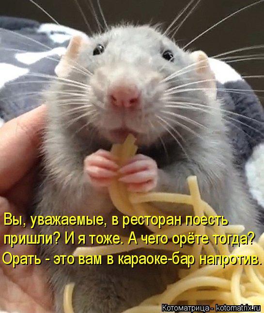 kotomatritsa_NA (545x645, 303Kb)
